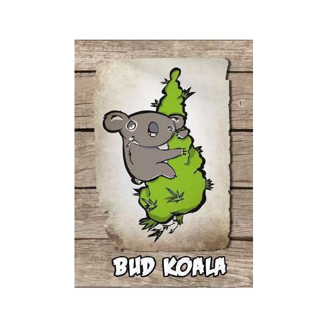 Bud Koala