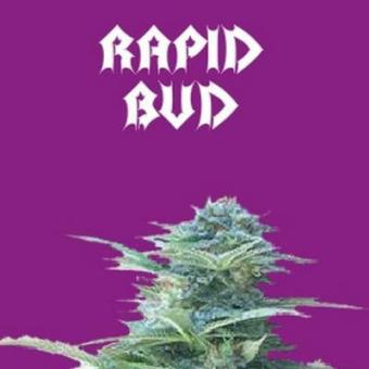 Rapid Bud Auto