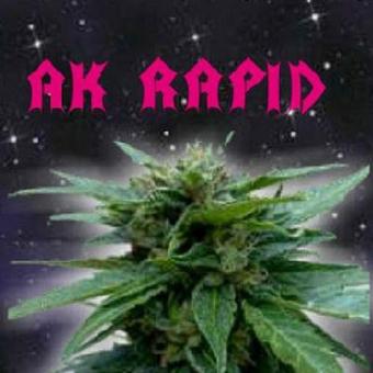 Ak Rapid Auto