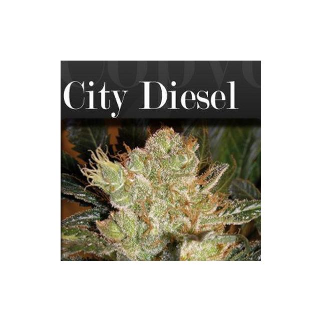 City Diesel