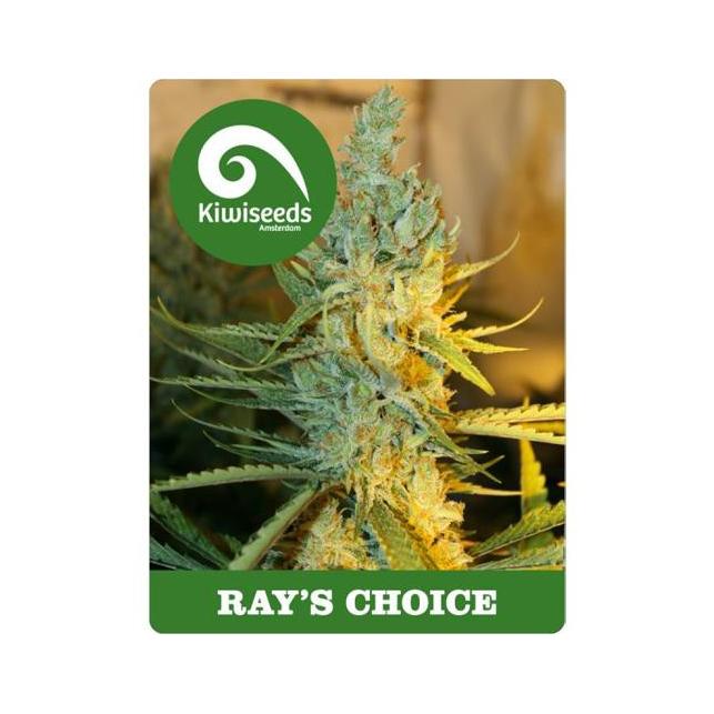 Ray's Choice Kiwi Seeds Feminized