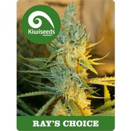 Ray's Choice Kiwi Seeds Feminized