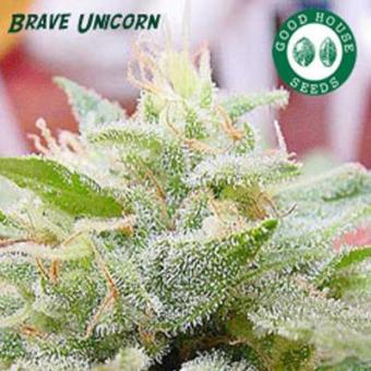 Brave Unicorn