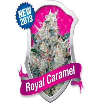 Royal Caramel