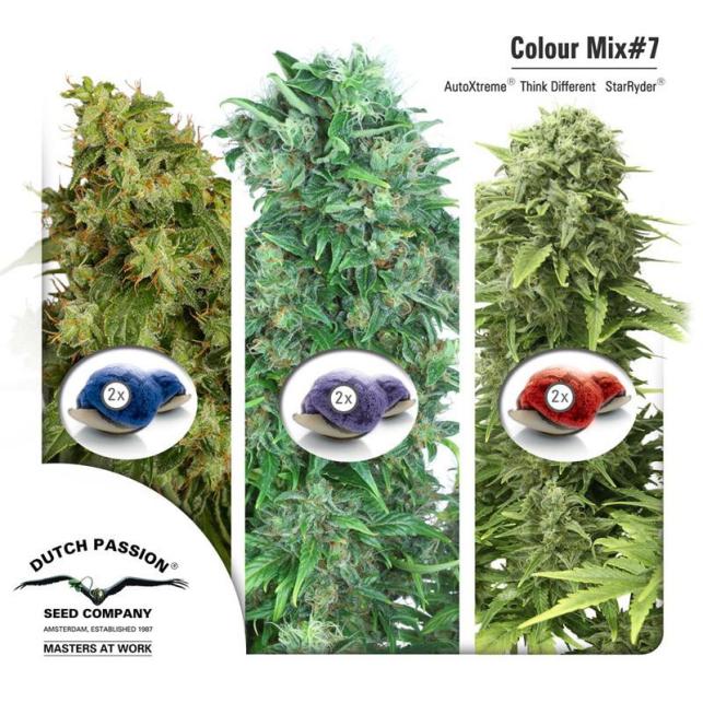 Color Mix 7 Autofem