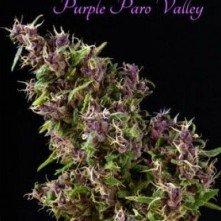 Purple Paro Valley