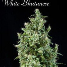 White Buthanese