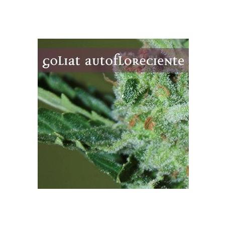 Goliath Auto