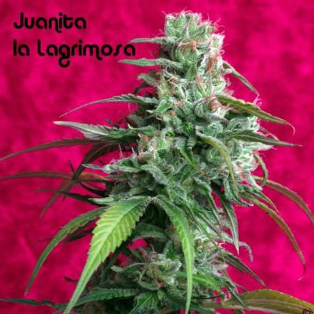 Juanita La Lagrimosa