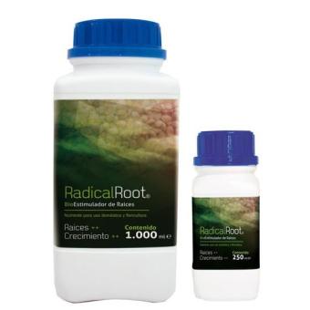 Radical Root (Growing)
