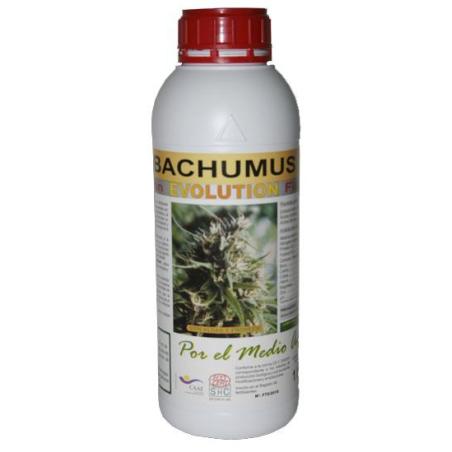 Bachumus Evolution (Floracion)