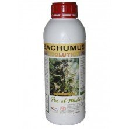 Bachumus Evolution (Flowering)