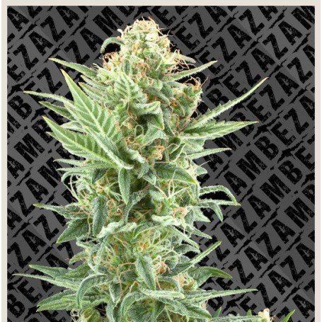 Power Kush Zambeza Seeds