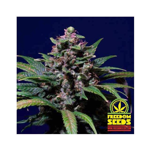 Sweet Purple 2
