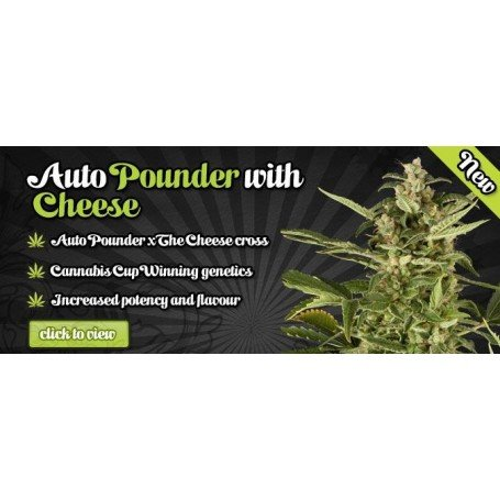 Auto Pounder With Cheese 1