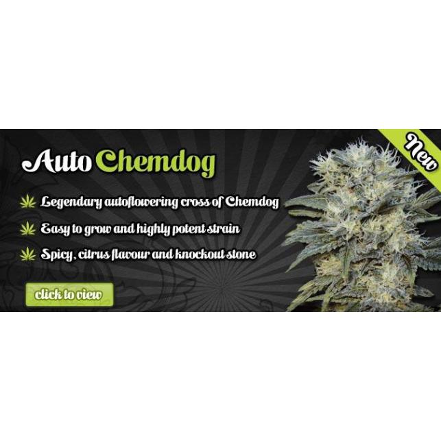 Chemdog Auto 1