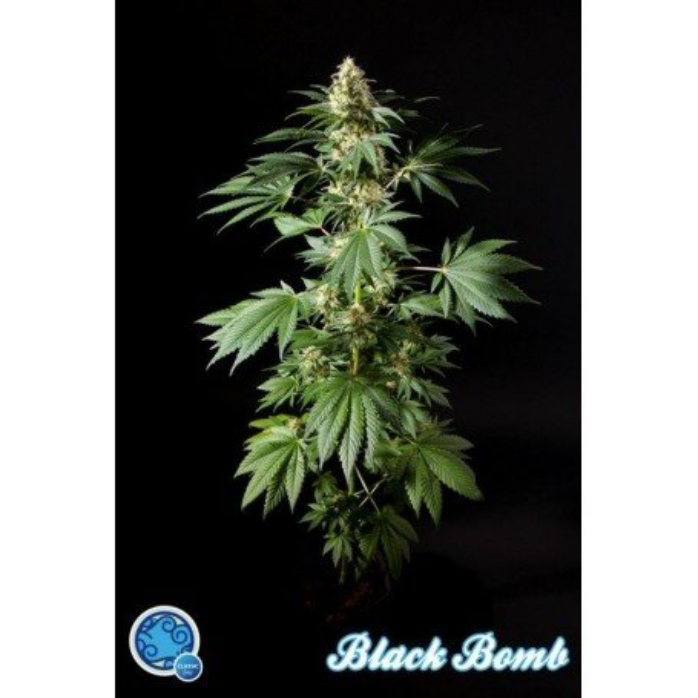 Black Bomb 3