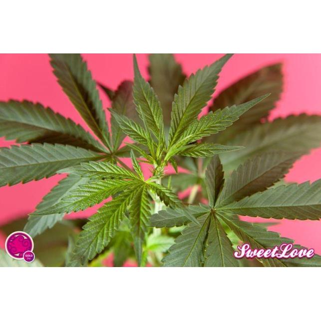 SweetLove 3