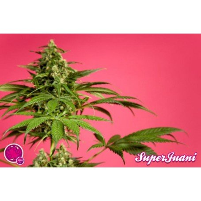 SuperJuani 4