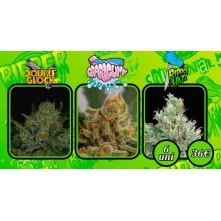 Coleccion 1 Ripper Seeds