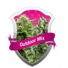 Outdoor MIX Royal Queen Seeds