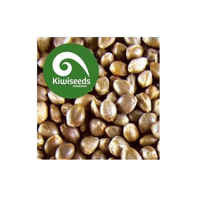 Outdoor Mix Kiwi Seeds