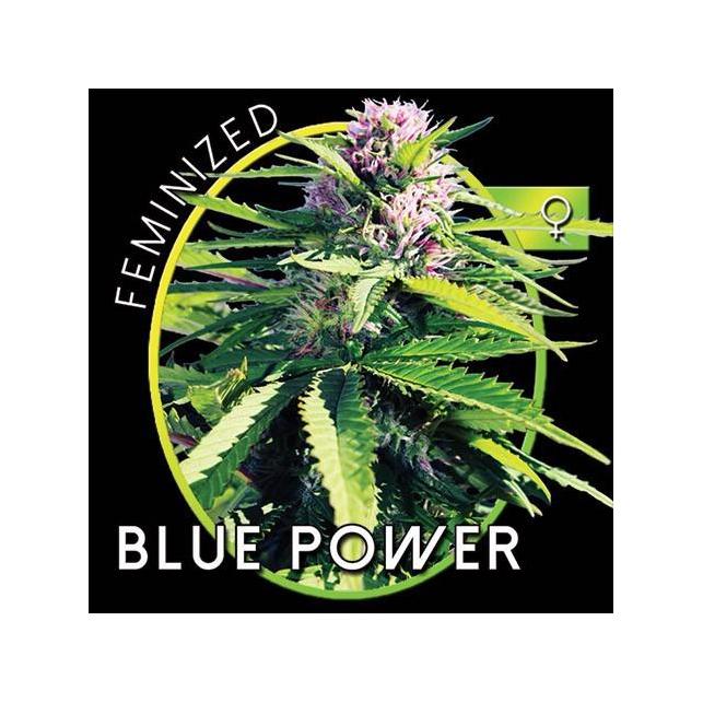 Blue Power 1