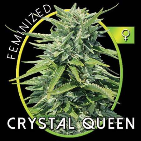 Cristal Queen 1