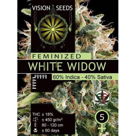 White Widow Vision Seeds 1