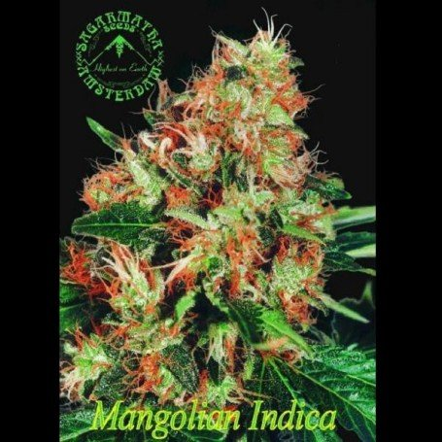 Mangolian Indica
