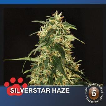 SilverStar Haze
