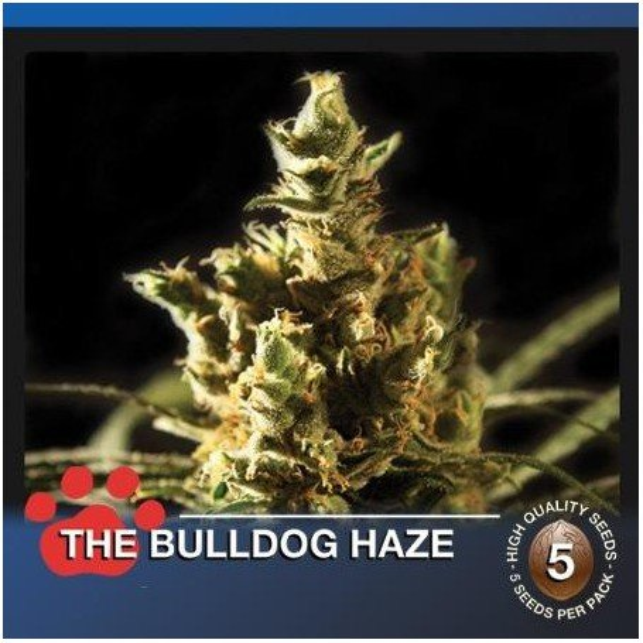 The Bulldog Haze