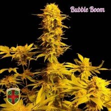 Bubble Bomb All-in-medical