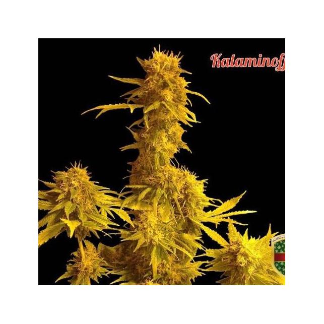 Kalaminoff