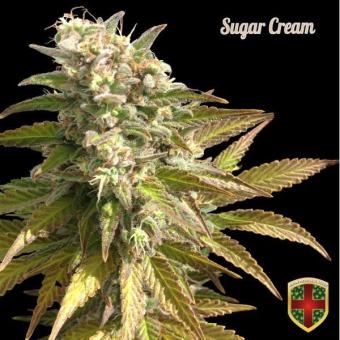 Sugar Cream