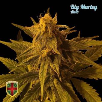 Big Marley Auto