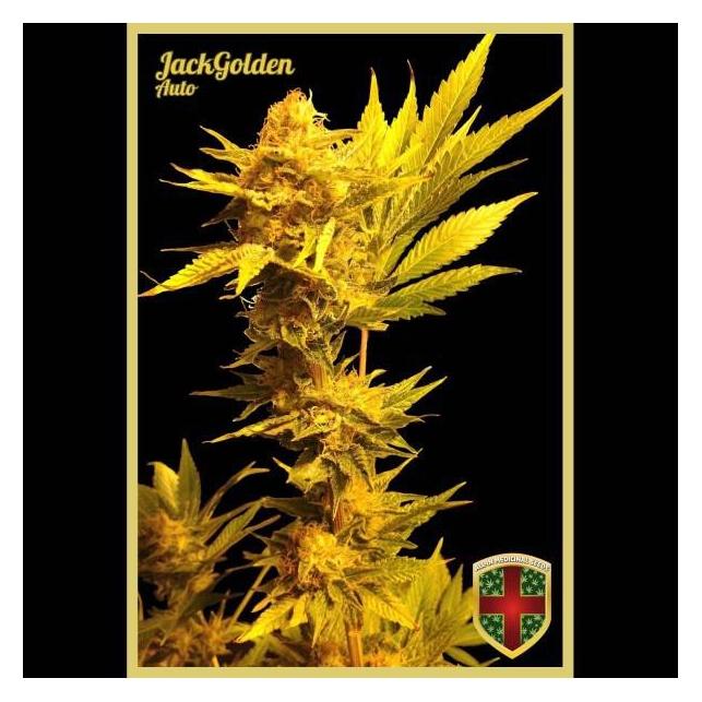 Jack Golden Auto