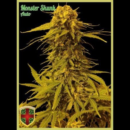 Monster Skunk Auto
