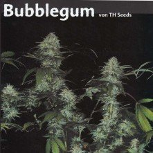 BubbleGum TH Seeds Feminizada