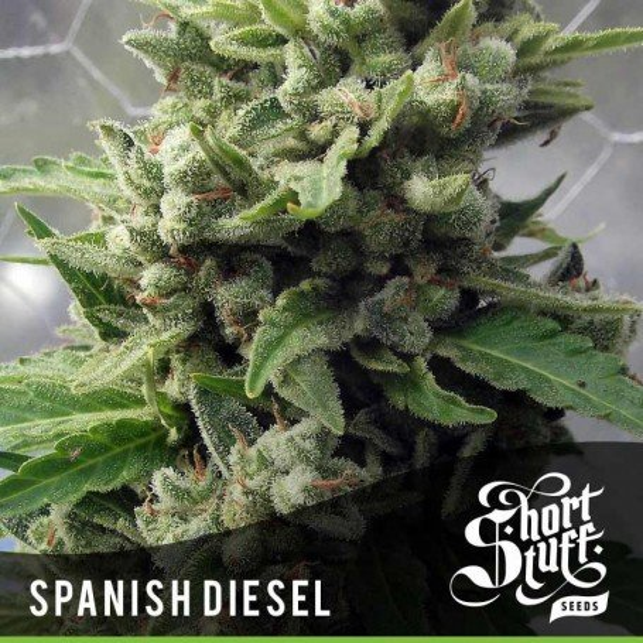 Auto Spanish Diesel 1