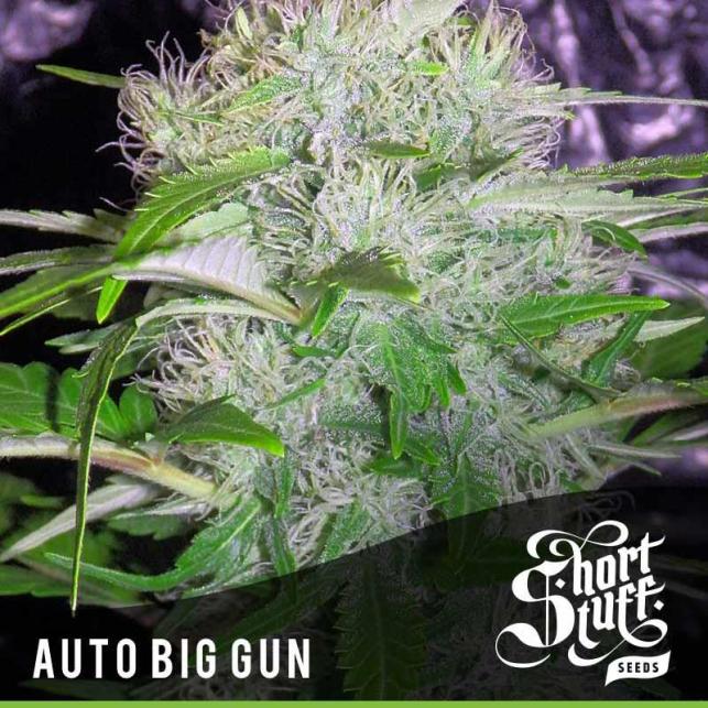 Auto Big Gun 1