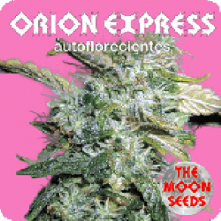 Orion Express Auto