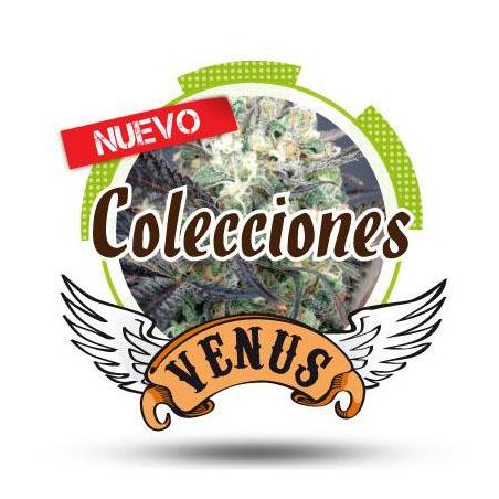 Colección 1 Venus