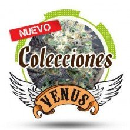 Venus Collection 1