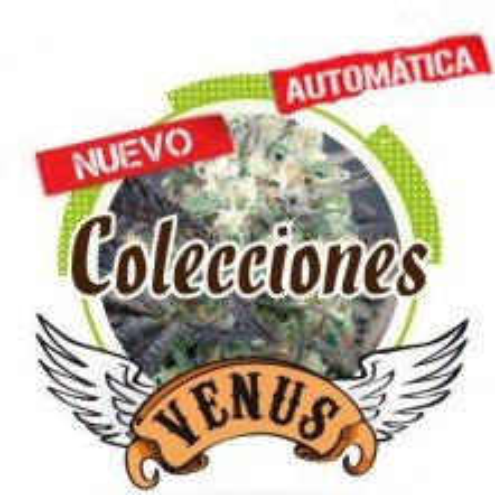 Auto Collection Venus