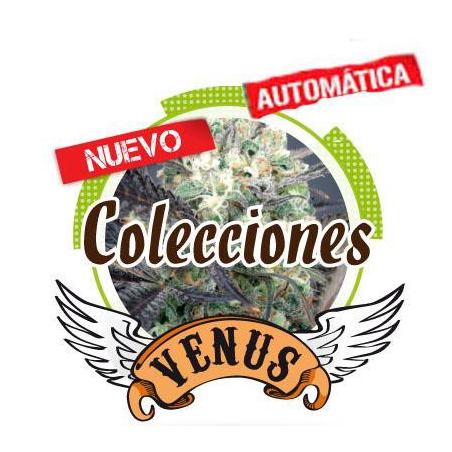 Colección Auto Venus