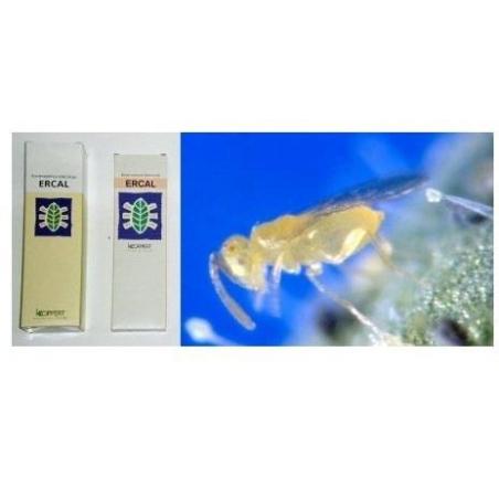 Ercal 3000 (Eretmocerus Eremicus contra mosca blanca)