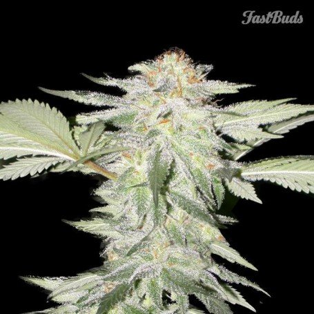 Crystal Meth 3