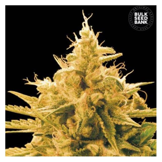 Ananas Funk - Bulk Seed Bank