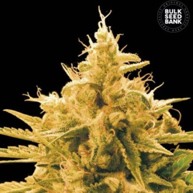 Ananas Funk The Bulk Seeds